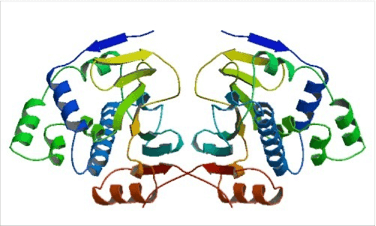 HSP90 Structure - Structure of the tetragonal form of the N-terminal domain of Hsp90 from yeast. Fig1